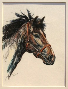 """Yearling"", conte and charcoal, 15"" x 19"", summer 2009, by Tiana Kaczor. For sale."