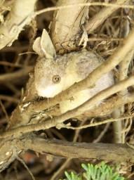 Bunny in the Bush